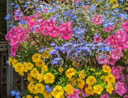 Flowers…Beautiful Flowers Everywhere!